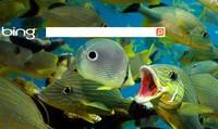 Bing интегрируется с интернет-магазинами