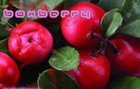 Boxberry начала доставлять для  Е5.RU
