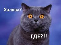 """Покритикуйте магазин"" от экспертов"