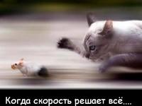 """""""Мобильный"""" магазин: кто быстрее, тот и выиграл"""