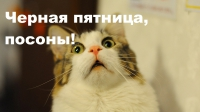 """""""Черная пятница-2015"""" опоздала на 2 часа (онлайн-репортаж)"""