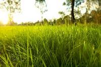 Где трава погуще? (инфографика)
