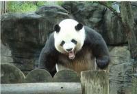 Google: как отбиться от Панды