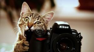 Товар лицом. Восемь полезных советов по созданию фото для интернет-магазина