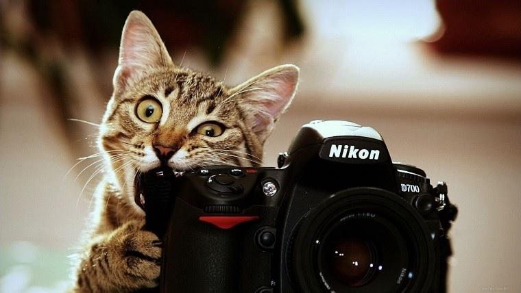 Как сделать крутые фото для интернет-магазина своими руками. Восемь советов
