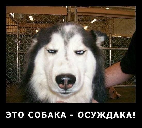 собака осуждака
