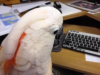 Попугай справился с заказом на Amazon
