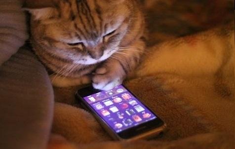 Лежа на диване вечером, уткнувшись в смартфон или планшет