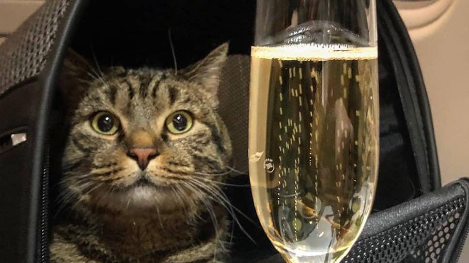 """""""Ситимобил"""" предложил хозяину толстого кота бонусные мили взамен отобранных """"Аэрофлотом"""""""