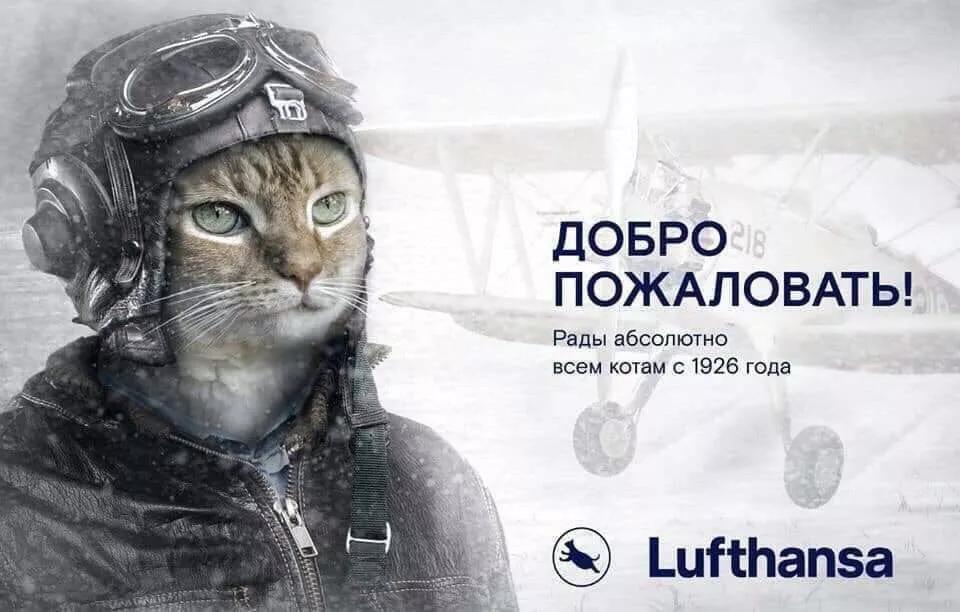 Люфтганза толстый кот