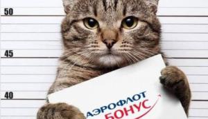 Два кило косметики и скидки по живому весу: как бизнесы обыграли в маркетинге хайп с толстым котом