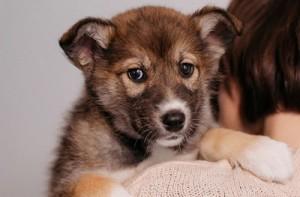 IKEA начала раздавать собак и кошек в Сети