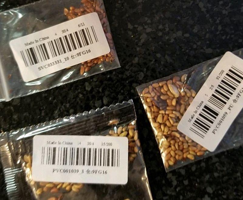 Маркетплейсы США объявили войну загадочным китайским семенам